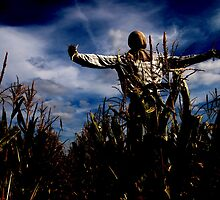 Scarecrow Fields by Hallowaltz