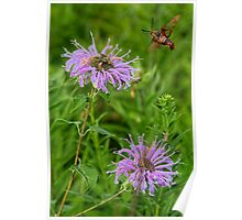 Wildflower with Large Flying Insect Poster