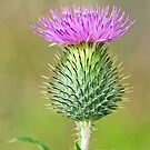 Spear Thistle by M.S. Photography & Art