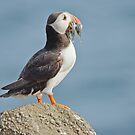 Puffin with sandeels by M.S. Photography & Art