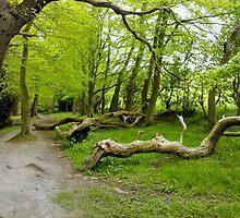 A Spring stroll ... by Susan100