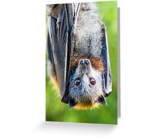 Grey-headed Flying-fox Greeting Card