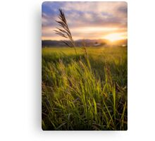 Meadow Light Canvas Print