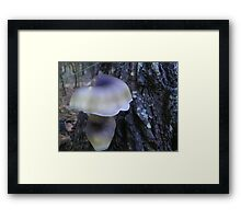 Fairy Lights in the National Park Framed Print