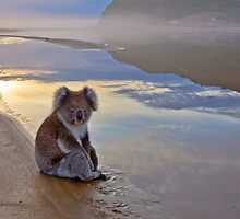 Koala Reflections by pablosvista2