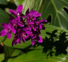 Shadows of Orchids by Georgia Mizuleva