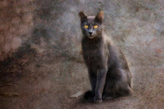 amber eyes by lucyliu