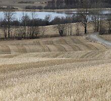 Country road through farm land. Spring time. by UpNorthPhoto