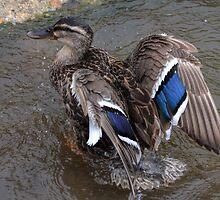 After A Splashing Bath by lynn carter