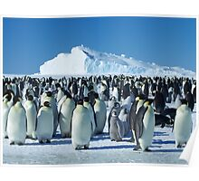 Auster Emperor Penguin Rookery Poster