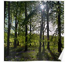 Bluebell woods Poster