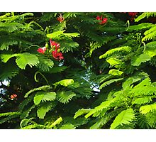 Tree with Buds and Blooms Photographic Print
