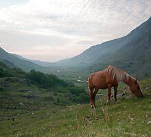 Welsh Mountain Pony by Ian Leyland