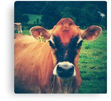 Cow 110 Canvas Print