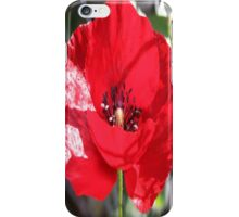 Single Red Poppy Flower  iPhone Case/Skin