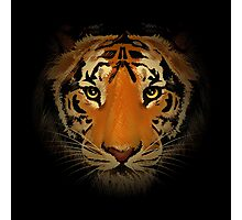 The tiger head in the dark. Photographic Print