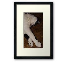 Quincy Sleeping Framed Print