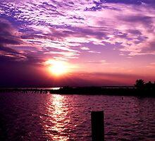 Evening Light at Claiborne, Maryland by Hope Ledebur