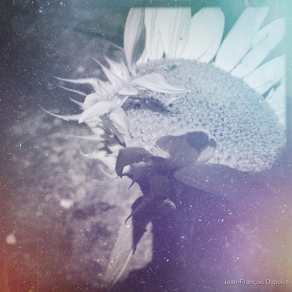 Sunflower by Jean-François Dupuis