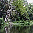 Lake Killarney  by Susan S. Kline