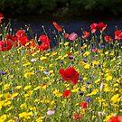Wild Flowers by Jane Horton