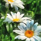 Gardens - Three White Daisies by Susan Savad