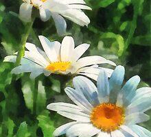 Gardens - Three White Daisies by Susan Savad