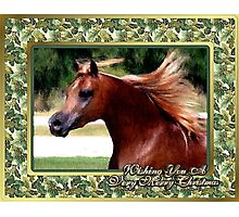 Arabian Horse Blank Christmas Card Photographic Print