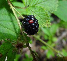 Blackberry time by vigor
