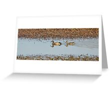Blue-winged Teal Greeting Card