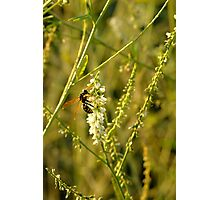 Yellow Jacket Photographic Print