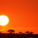 African sunrise by Tara Pirie