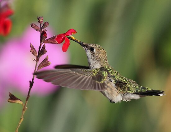Palomino Valley Hummer by SB  Sullivan