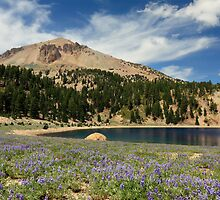 Lupines Lake Helen And Mount Lassen by James Eddy