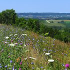 Beautiful Hills of Northeast Iowa by lorilee