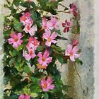 Climbing Pinks by Kenneth Hoffman