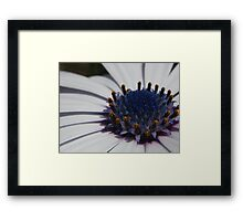 It's an alien world Framed Print