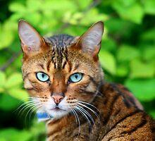 Cat Eyes by Hannah Taylor