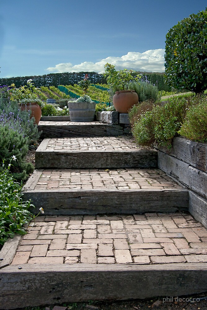 Steps To The Vineyards by phil decocco