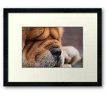 puppy nose Framed Print