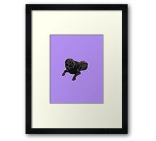 Purple Chocolate Lab Framed Print