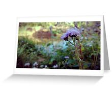 Purple Buds Greeting Card