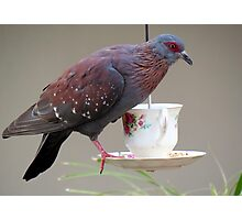 Pigeon on a cup  Photographic Print
