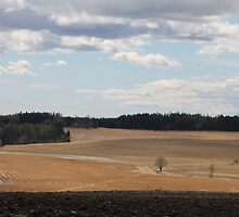 Rural landscape. Ås, Akershus, Norway. Spring time. by UpNorthPhoto