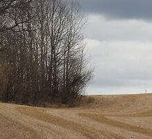 Stubble. Spring time farm land. Ås, Norway, by UpNorthPhoto
