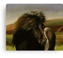 Shetland Pony in Pastel  Canvas Print