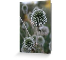Macro Seed Head of Round Headed Garlic Greeting Card
