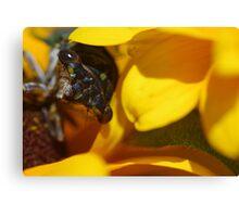 Macro.....*Cicadas* Canvas Print