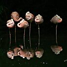 Reflecting Flamingos by Lisa Taylor