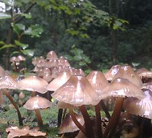 shrooms in the woods by jessicalena
